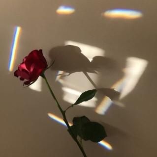 لومــي avatar picture